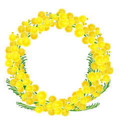 Wreath of yellow acacia flowers twigs vector