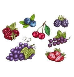 Berries fruits set color sketches vector