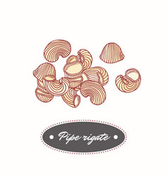 Hand drawn pasta pipe rigate isolated on white vector