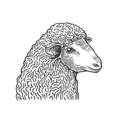 head of sheep hand drawn in style of medieval vector image