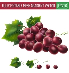 Red grapes on white background vector