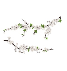 spring blooming tree branches with white flowers vector image vector image