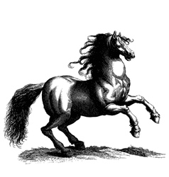 Horse engraving vector