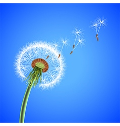 Dandelion seeds blowing away background vector image