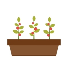 Young green plant seedling growing in a soil flat vector