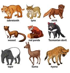 Rare animal vector image