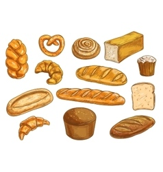 Bread sorts and bakery sketched objects vector