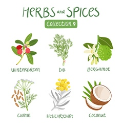 Herbs and spices collection 9 vector