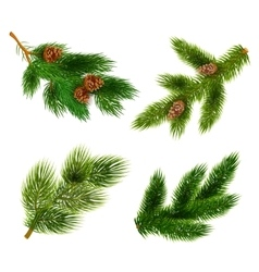 Fir and pine trees branches icons set vector