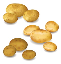 Set of vegetable potato isolated vector