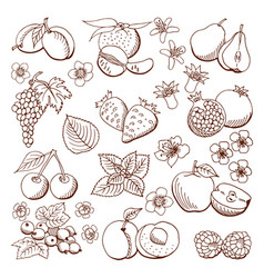 fruits and berries design vector image