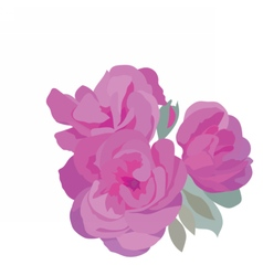 Watercolor pink roses vector