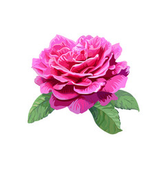image of pink rose isolated on white background vector image