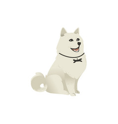 Cute fluffy little dog sitting straight looking up vector