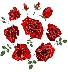 Hand drawn set of roses rose buds and leaves on vector