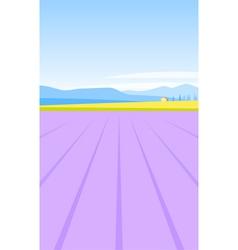 lavender field vector image vector image