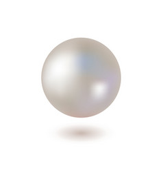 shiny pearl on white background vector image vector image