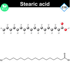 Stearic fatty acid atomic structure vector image vector image