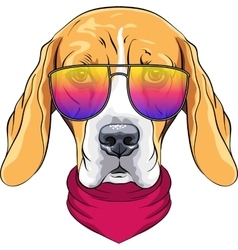 Hipster serious dog beagle in glasses vector