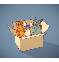 Sad homeless street pets cats in box color vector