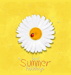 Daisy summer flower chamomile best summer vector