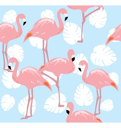 Flamingos vector
