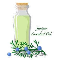 Essential oil of juniper vector