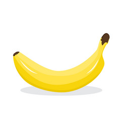 fresh banana on white background vector image vector image