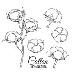 Hand drawn decorative cotton flowers vector image