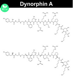 Dynorphin A chemical structure vector image vector image