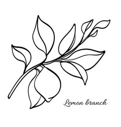 Lemon branch vector