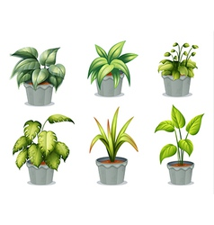 Six leafy plants with pot vector