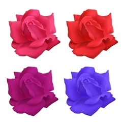 Set of roses vector