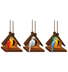 macaw parrots living in birdhouse vector image