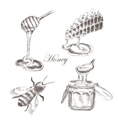 Honey honeycells honeystick bee vector