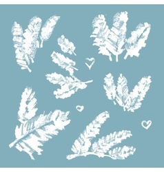 Collection of snow-covered pine branches vector image vector image