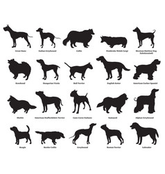 set of dogs silhouettes-2 vector image vector image