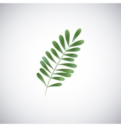 Tropical leaves design leaf icon natural concept vector image