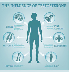 Testosterone effects infographics vector