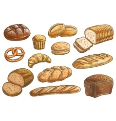 Bread sorts and bakery pencil sketch icons vector