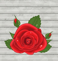 Close-up red rose for valentine day on wooden vector