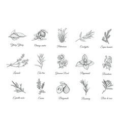 Herbs and spices set collection sketch plants vector