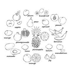 Set of fruit doodles vector image