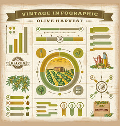 Vintage olive harvest infographic set vector