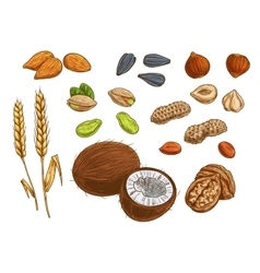 Nuts grain and kernels sketch icons vector
