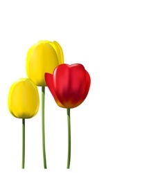 Red and yellow tulips isolated on white background vector
