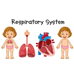 Respiratory system in little girl vector