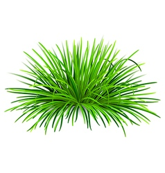 Bunch of green grass vector