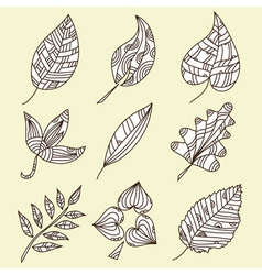set of 9 decorative leaves vector image