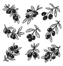 set of isolated hand drawn sketches of olive oil vector image vector image